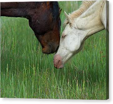 Canvas Print featuring the photograph Forever Wild by Mary Hone