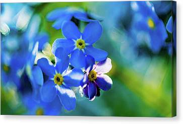 Forget Me Not Eight Canvas Print by Mo Barton