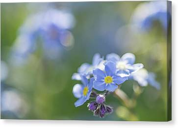Forget Me Not Five Canvas Print by Mo Barton