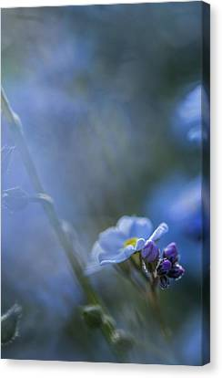 Forget Me Not Four Canvas Print by Mo Barton