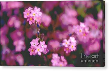 Canvas Print featuring the photograph Forget Me Not by Louise Fahy