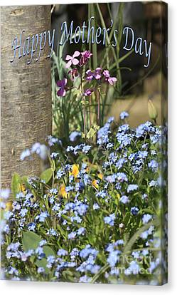 Forget-me-not On Mother's Day Canvas Print by Terri Waters