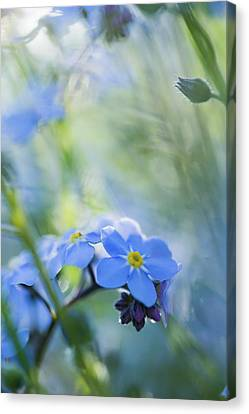 Forget Me Not Two Canvas Print by Mo Barton