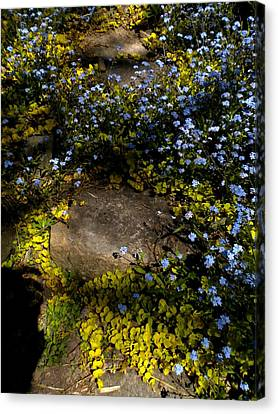 Canvas Print featuring the painting Forget-me-nots 1 by Renate Nadi Wesley