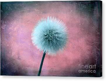 Forgotten Wishes Canvas Print by Krissy Katsimbras