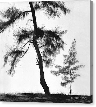 Form Of Tree  Canvas Print by Indian School