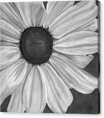 Formal Bloom Canvas Print by Christina Steward