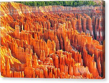 Formations At Bryce Canyon Ampitheater Canvas Print by Jay Mudaliar