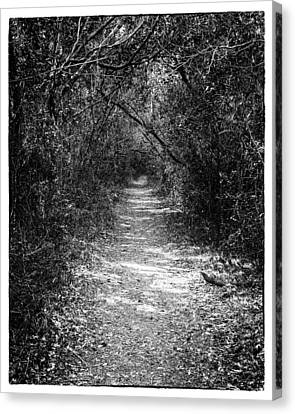 Forest Floor Canvas Print - Forest Floor 0102bw by Rudy Umans