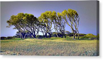 Canvas Print featuring the photograph Fort Fisher Trees by Phil Mancuso