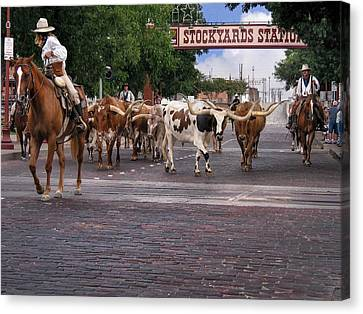 Fort Worth Cattle Drive Canvas Print by David and Carol Kelly