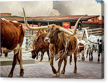 Fort Worth Cattle Drive Canvas Print by Kelley King