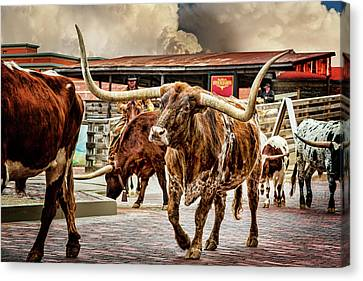 Fort Worth Stockyards Canvas Print by Kelley King