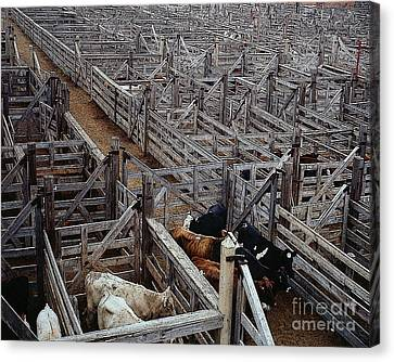 Fort Worth Stockyards Canvas Print