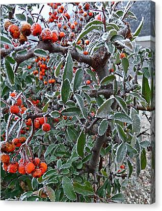 Forzen Berries Canvas Print by Explorer Lenses Photography