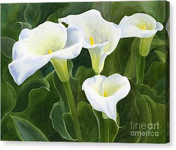 Four Calla Lily Blossoms With Leaves Canvas Print by Sharon Freeman