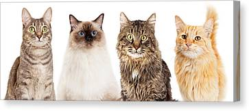Four Happy Cats Website Banner Canvas Print