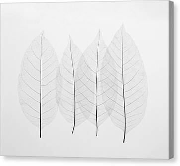 Four Leafs Canvas Print