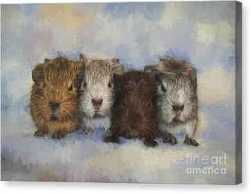 Cavy Canvas Print - Four Little Guinea Pigs by Jutta Maria Pusl