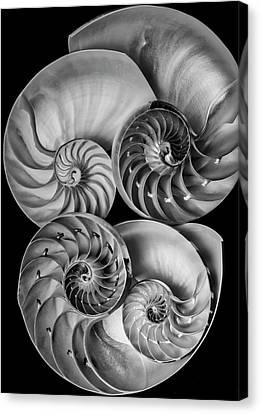 Conchology 1810 Nautilus Canvas Print