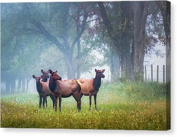 Canvas Print featuring the photograph Four Of A Kind by James Barber