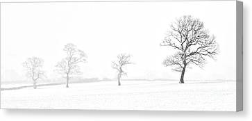 Four Trees Farndale Canvas Print by Janet Burdon