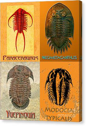 Four Trilobites Canvas Print by Melissa A Benson
