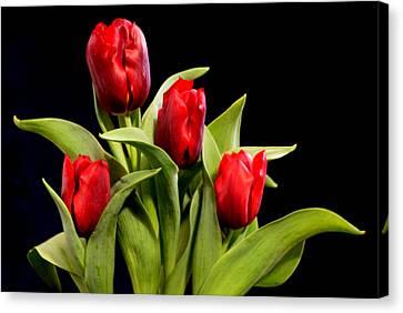 Four Tulips Canvas Print