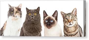 Four Animal Faces Canvas Print - Four Various Breed Cat Closeups by Susan Schmitz