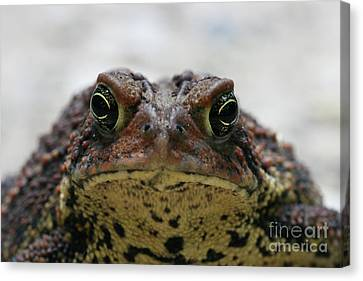 Fowler's Toad #3 Canvas Print