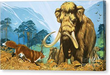 Fox Attacking Mammoth Canvas Print by Angus McBride