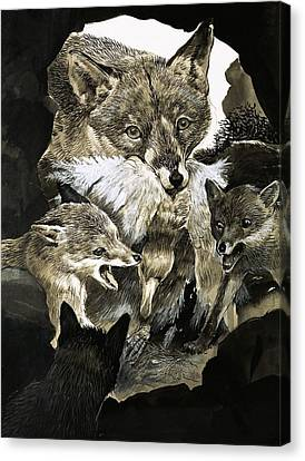 Fox Delivering Food To Its Cubs  Canvas Print