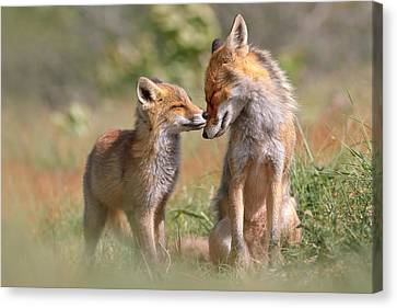 Kit Fox Canvas Print - Fox Felicity II - Mother And Fox Kit Showing Love And Affection by Roeselien Raimond