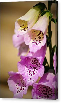 Fox Gloves Canvas Print by Bill Cannon