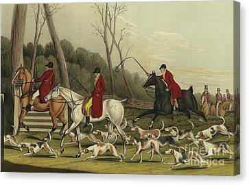 Fox Hunting Going Into Cover Canvas Print