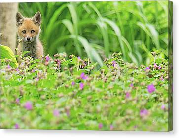 Fox In The Garden Canvas Print by Everet Regal