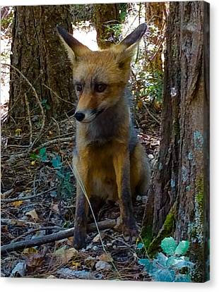 Canvas Print featuring the photograph Fox Joy  by Colette V Hera Guggenheim