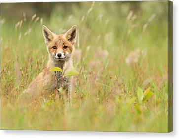 Fox Kit In The Filed Canvas Print by Roeselien Raimond