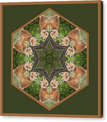 Fox Kit Star Canvas Print by Rhoda Gerig