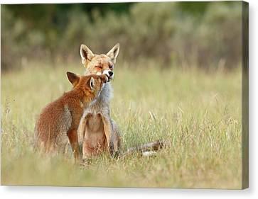 Fox Love Series - Kiss Canvas Print