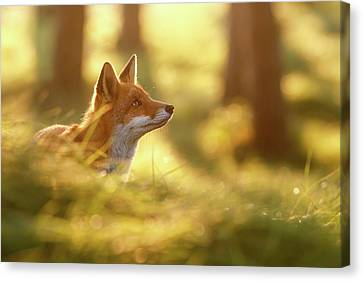 Fox Of Hope Canvas Print by Roeselien Raimond