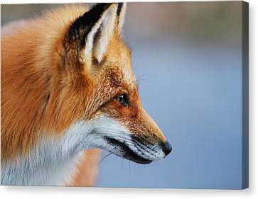 Fox Profile Canvas Print by Mircea Costina Photography