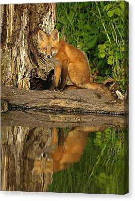 Fox Reflection Canvas Print