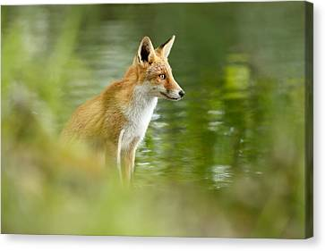 Fox Reflections Canvas Print by Roeselien Raimond