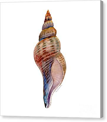 Seashell Canvas Print - Fox Shell by Amy Kirkpatrick