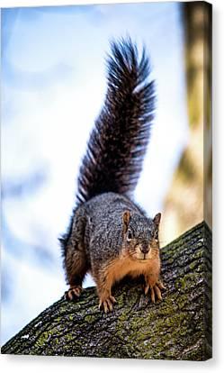 Fox Squirrel On Alert Canvas Print by Onyonet  Photo Studios