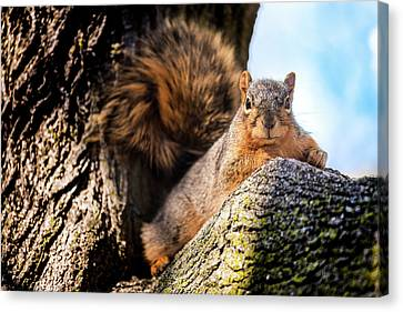 Fox Squirrel Watching Me Canvas Print by Onyonet  Photo Studios