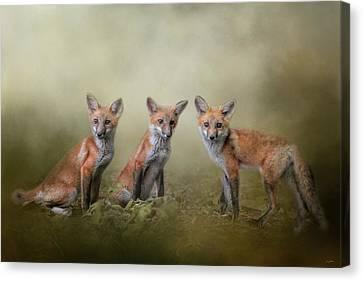 Fox Kit Canvas Print - Fox Trio by Jai Johnson