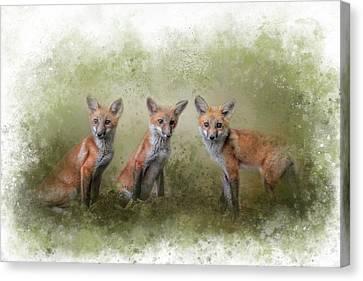 Fox Kit Canvas Print - Fox Trio Watercolor Border by Jai Johnson