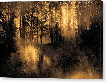 Foxfire Canvas Print by Theresa Campbell
